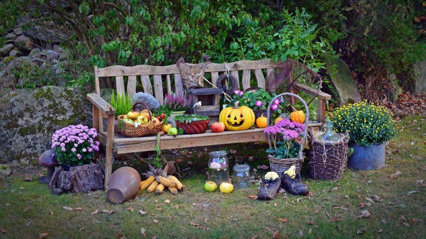 harvest-1642438_1280